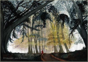 """Woodland Walk"" by John D Moulton"